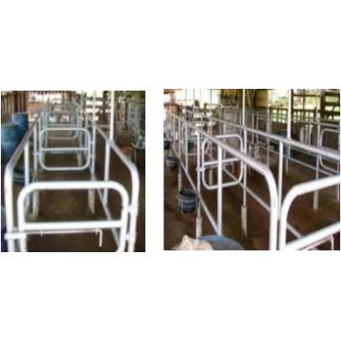 Contenção Fila indiana 2x4 (4 vacas de cada lado)
